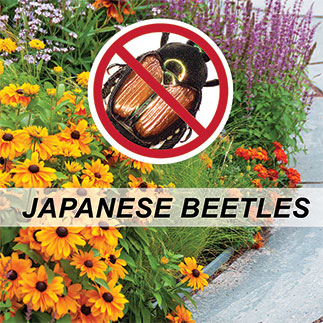 Insect control- Japanese beetles